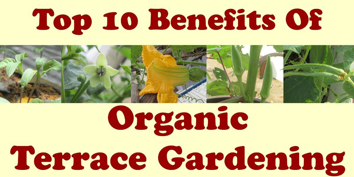 Benefits of Organic Terrace Gardening