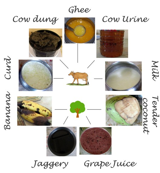 panchagavya ingredients