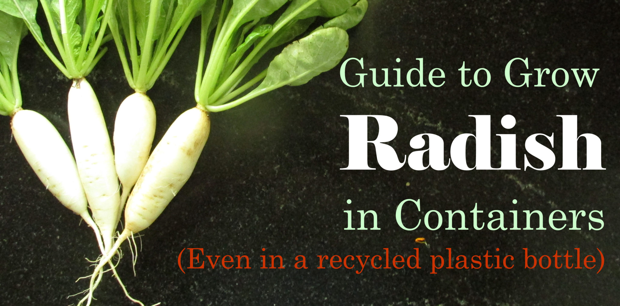 radish as pesticide Cpg sec 575100 pesticide residues in food and feed - enforcement criteria background: the regulation of food and feed containing pesticide residues is governed by sections 402, 408.