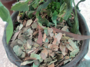 Dry leaves are excellent for mulching.