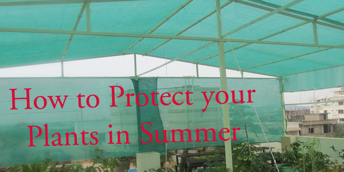 How to Protect your Plants in Summer – Simple and Effective Tips