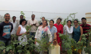 Entire batch in our Organic Terrace Garden
