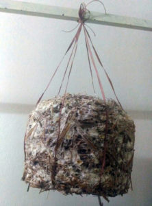 Hang the bundle with spider web like mycelium growth
