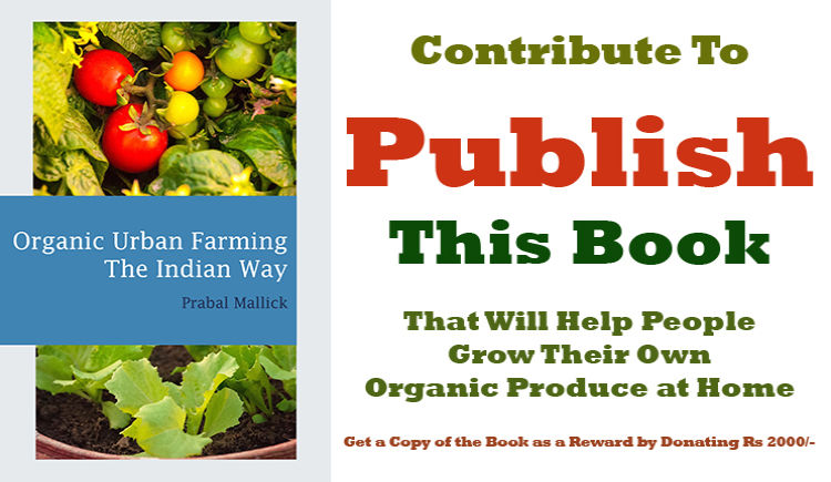 Donate to publish book on organic urban farming