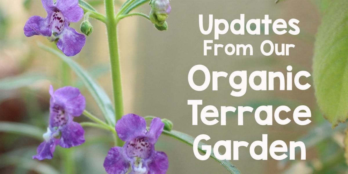 Garden Updates