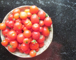 Collect ripe tomatoes from multiple plants