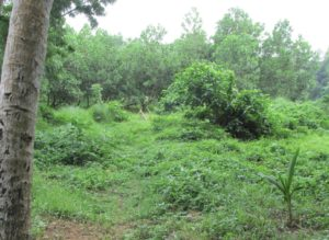Organic agriculture integrates forests with farming